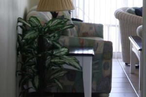 couch_turtlecrawl304